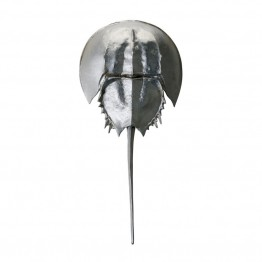 Dimond Home Horseshoe Crab in Silver